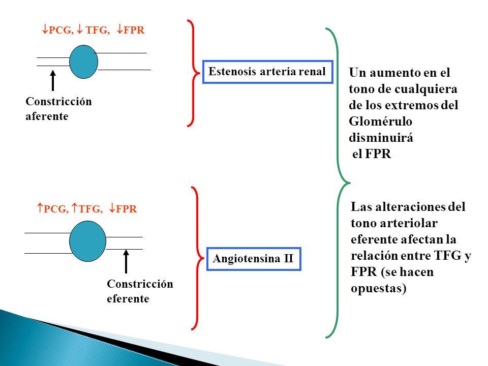 tono arteriolar eferente afectan la relación entre TFG y
