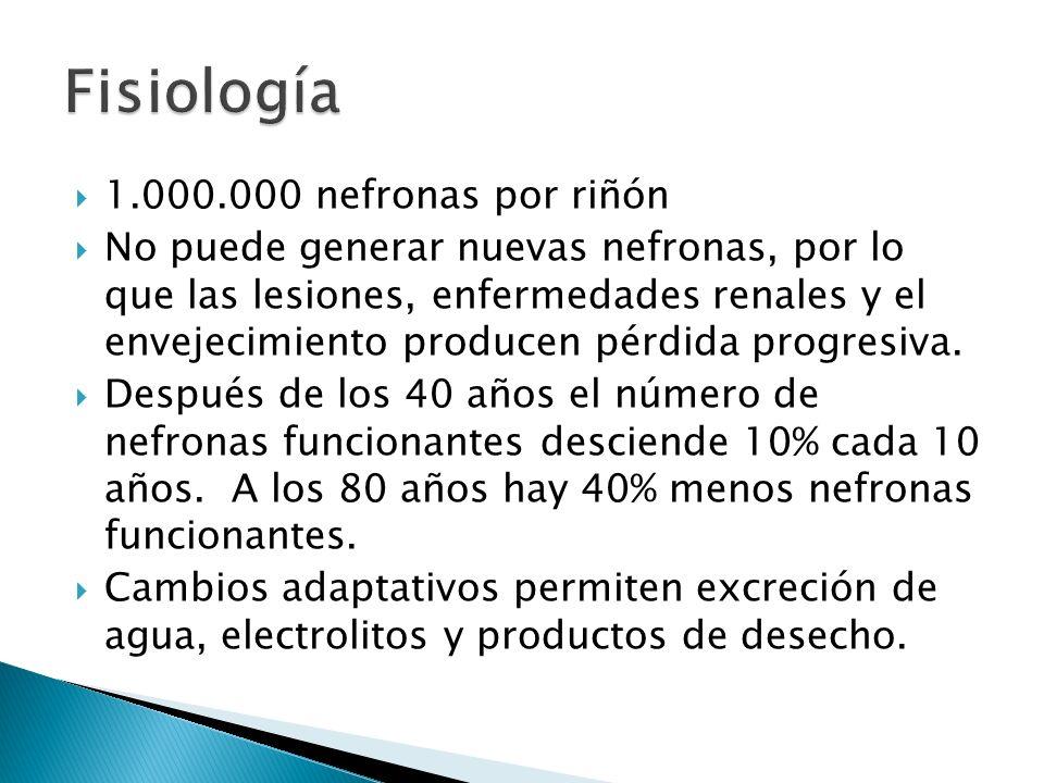 Fisiología 1.000.000 nefronas por riñón
