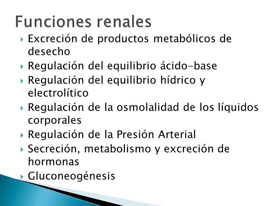 Funciones renales Excreción de productos metabólicos de desecho