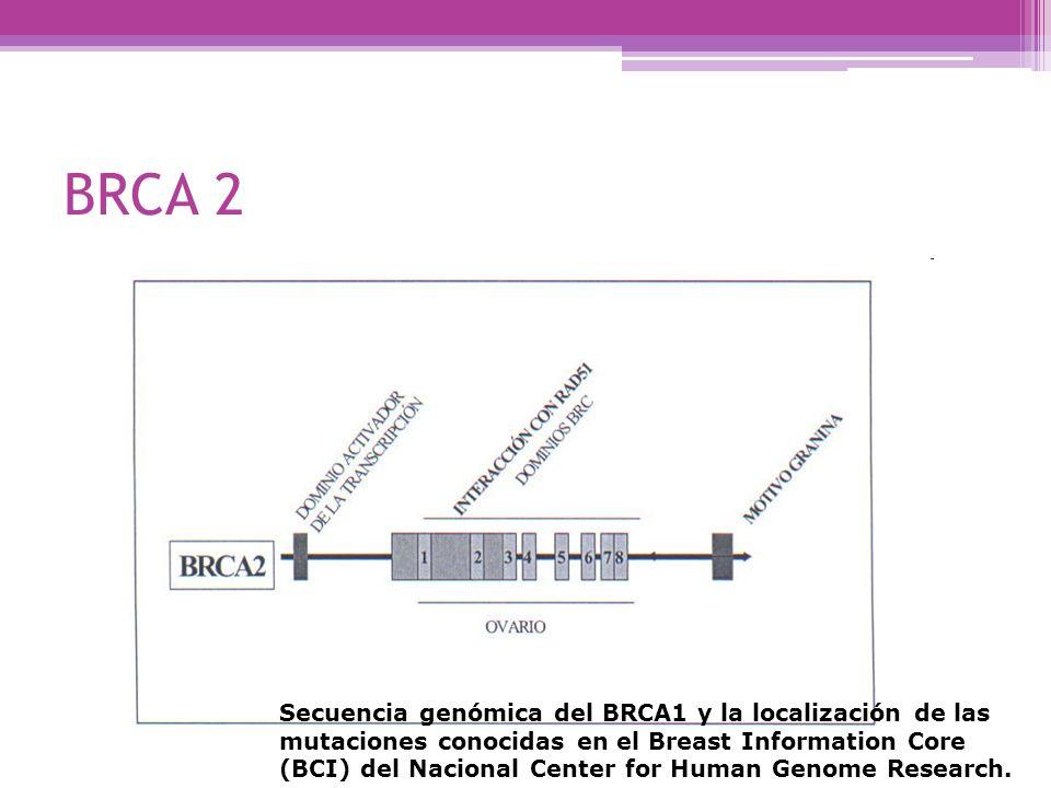 BRCA 2