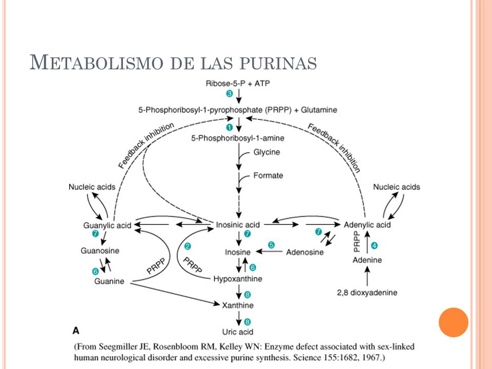 Metabolismo de las purinas