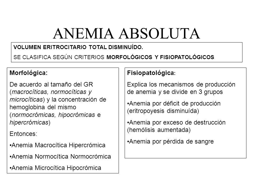 ANEMIA ABSOLUTA Morfológica:
