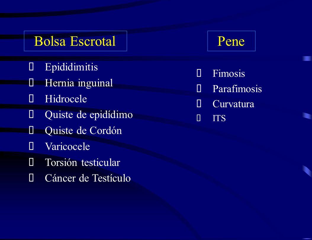 Bolsa Escrotal Pene Epididimitis Hernia inguinal Hidrocele