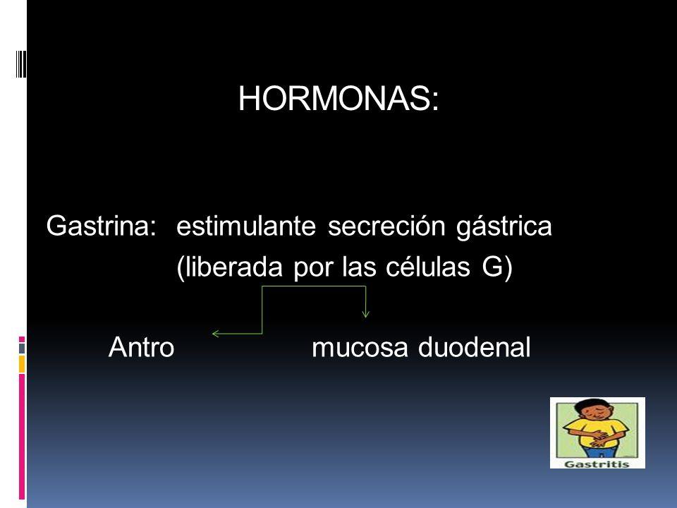 HORMONAS: Gastrina: estimulante secreción gástrica (liberada por las células G) Antro mucosa duodenal