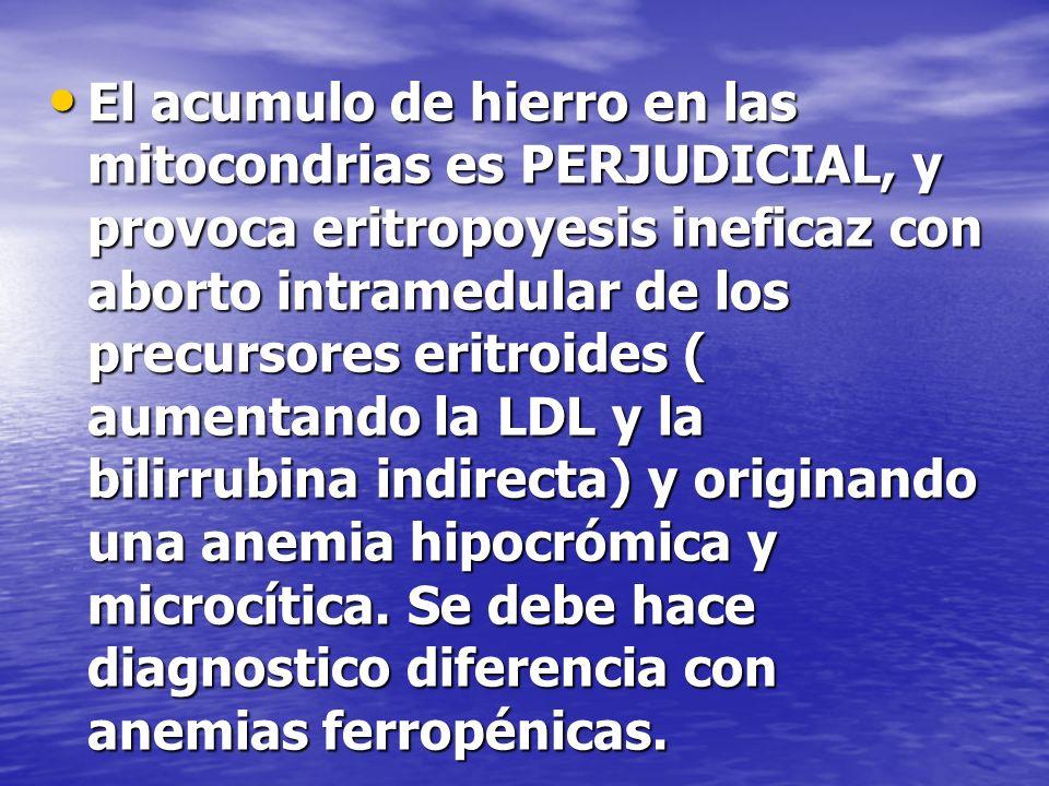 El acumulo de hierro en las mitocondrias es PERJUDICIAL, y provoca eritropoyesis ineficaz con aborto intramedular de los precursores eritroides ( aumentando la LDL y la bilirrubina indirecta) y originando una anemia hipocrómica y microcítica.