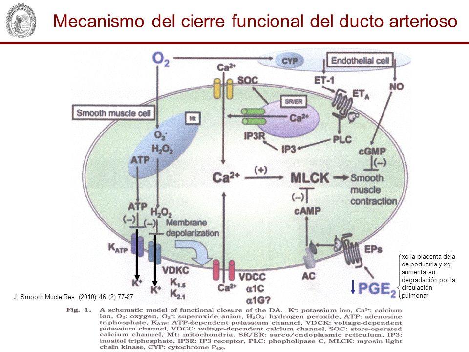 Mecanismo del cierre funcional del ducto arterioso