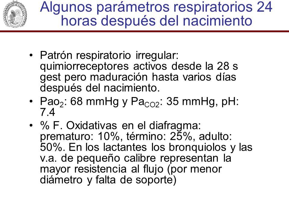 Algunos parámetros respiratorios 24 horas después del nacimiento