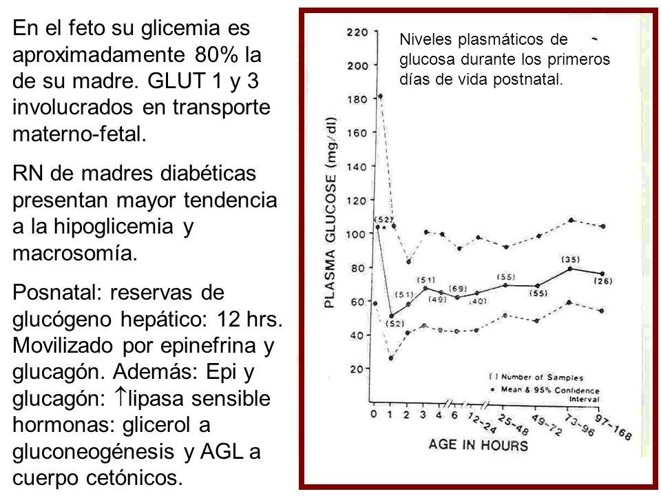 En el feto su glicemia es aproximadamente 80% la de su madre