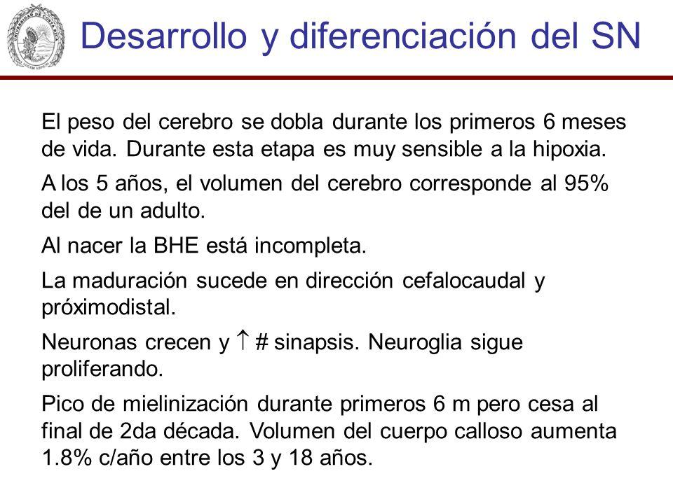Desarrollo y diferenciación del SN