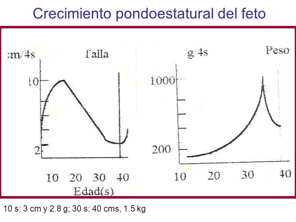 Crecimiento pondoestatural del feto