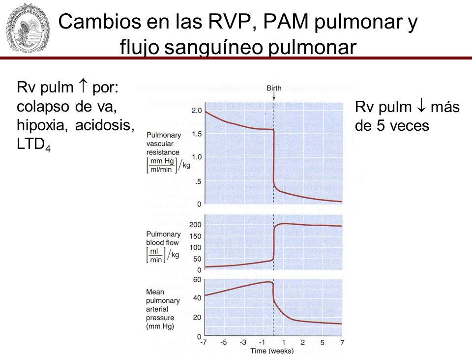 Cambios en las RVP, PAM pulmonar y flujo sanguíneo pulmonar