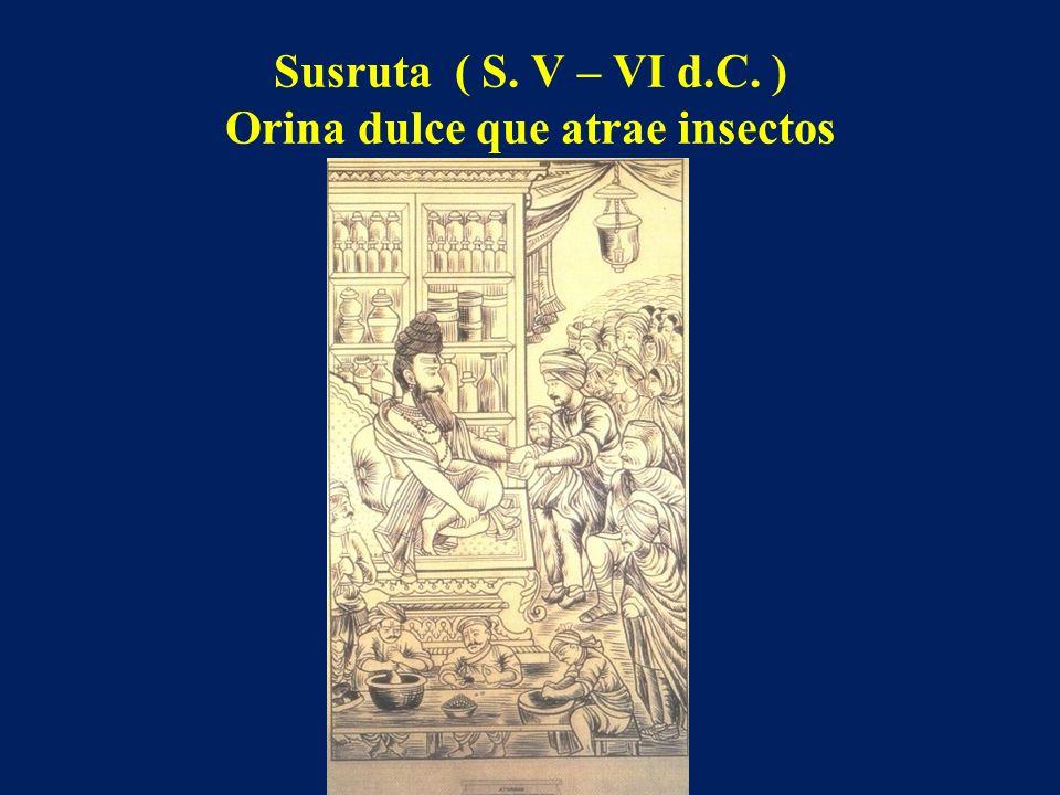 Susruta ( S. V – VI d.C. ) Orina dulce que atrae insectos