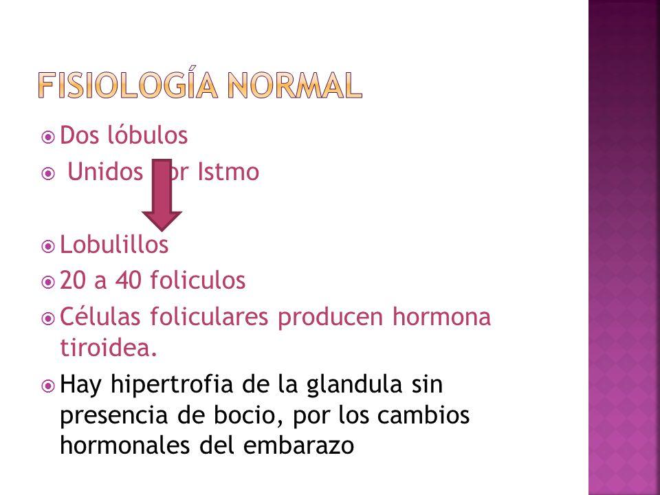 Fisiología normal Dos lóbulos Unidos por Istmo Lobulillos