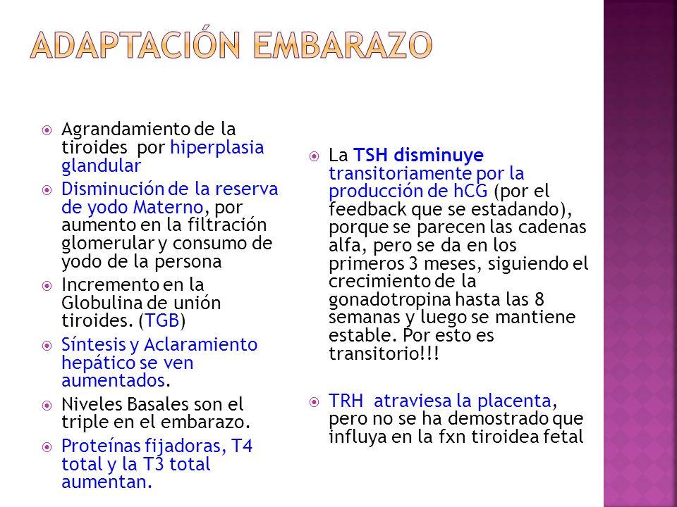 Adaptación Embarazo Agrandamiento de la tiroides por hiperplasia glandular.