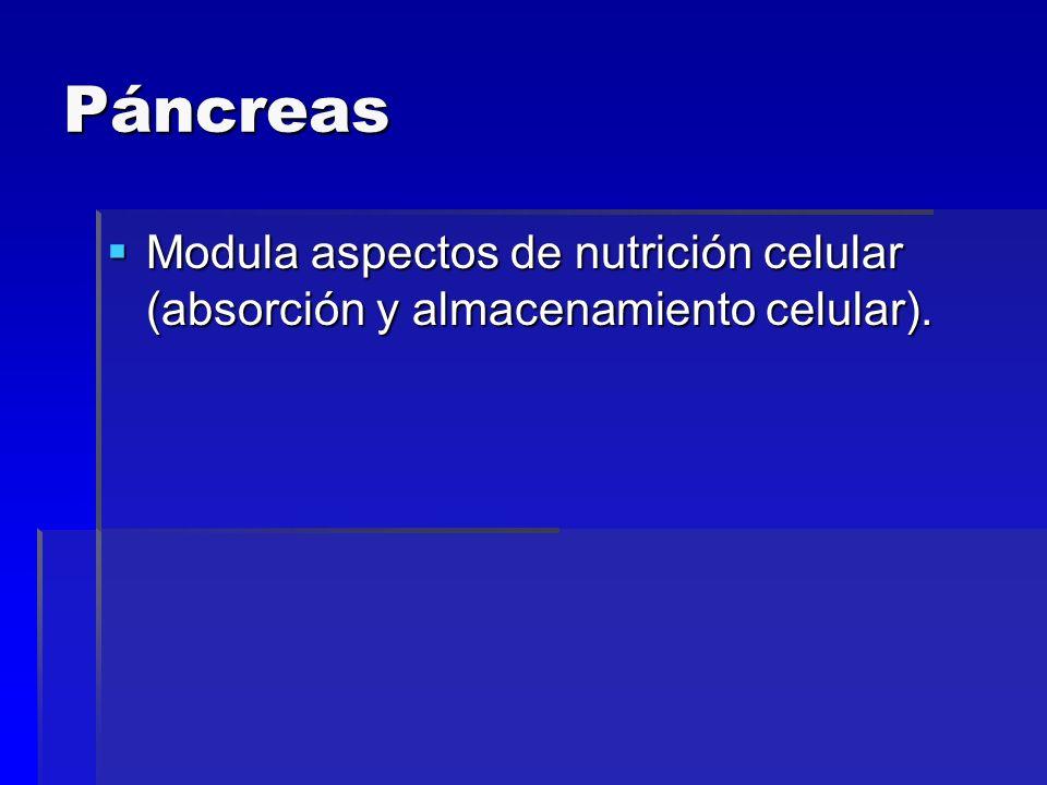 Páncreas Modula aspectos de nutrición celular (absorción y almacenamiento celular).