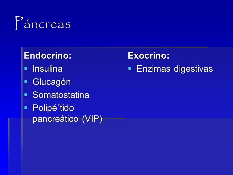 Páncreas Endocrino: Insulina Glucagón Somatostatina