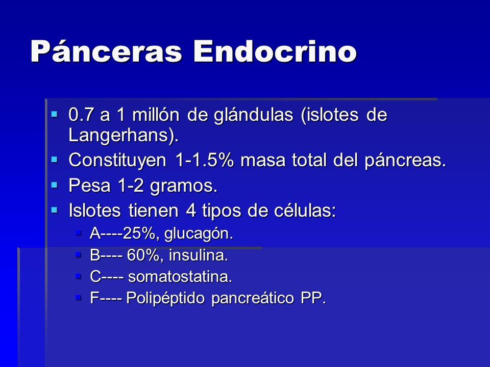 Pánceras Endocrino 0.7 a 1 millón de glándulas (islotes de Langerhans). Constituyen 1-1.5% masa total del páncreas.