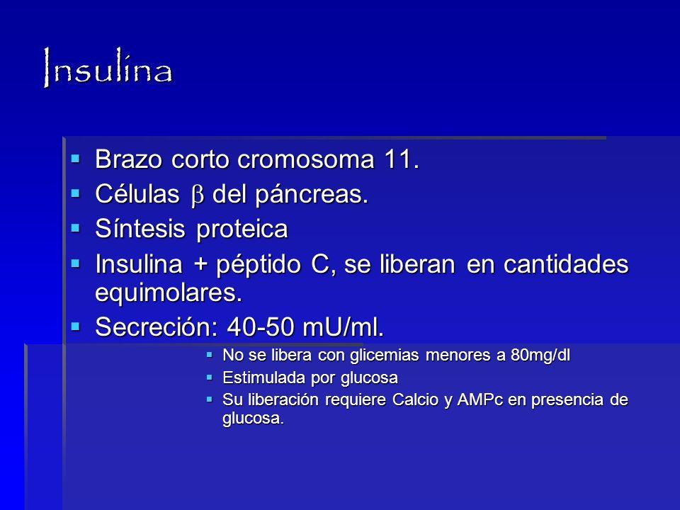 Insulina Brazo corto cromosoma 11. Células  del páncreas.