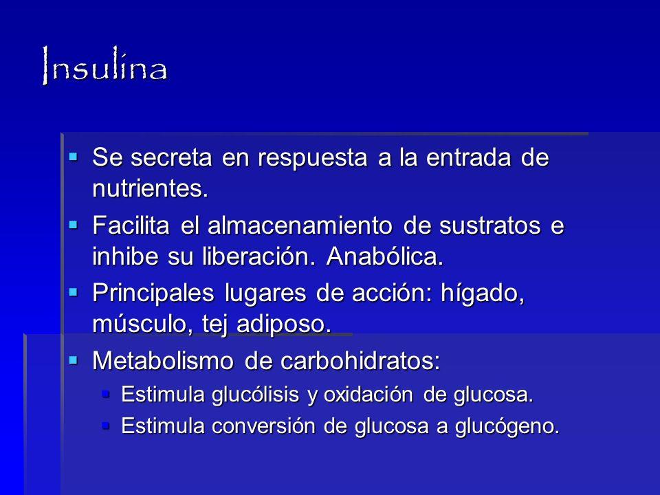 Insulina Se secreta en respuesta a la entrada de nutrientes.