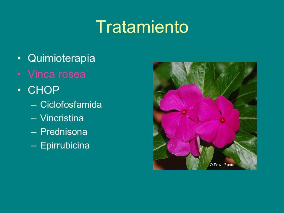 Tratamiento Quimioterapia Vinca rosea CHOP Ciclofosfamida Vincristina