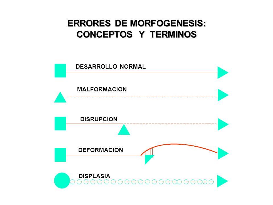 ERRORES DE MORFOGENESIS: