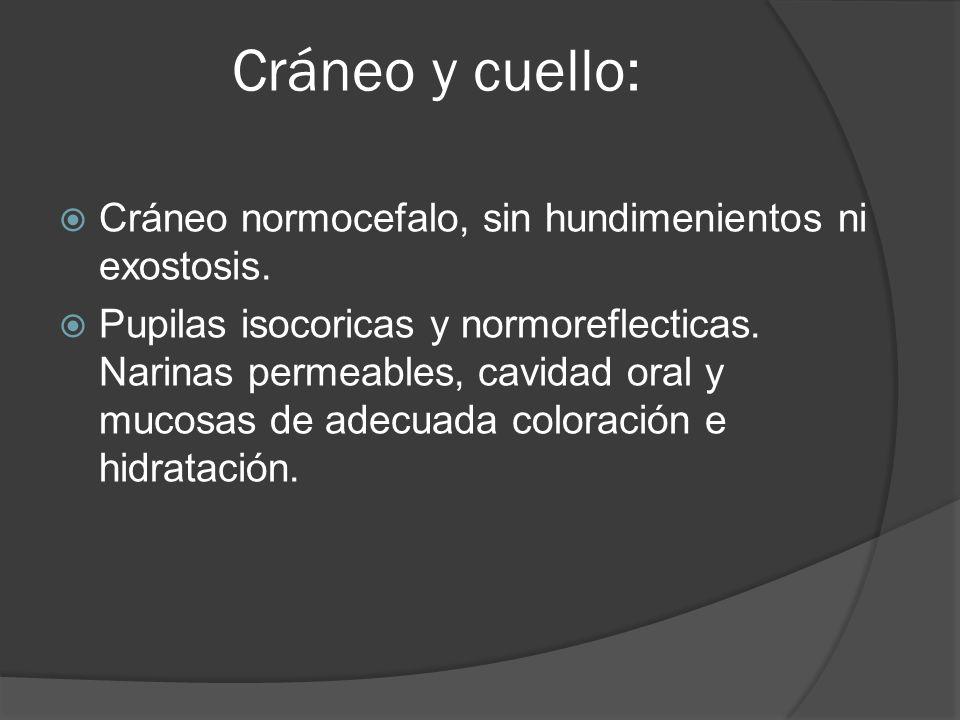 Cráneo y cuello: Cráneo normocefalo, sin hundimenientos ni exostosis.