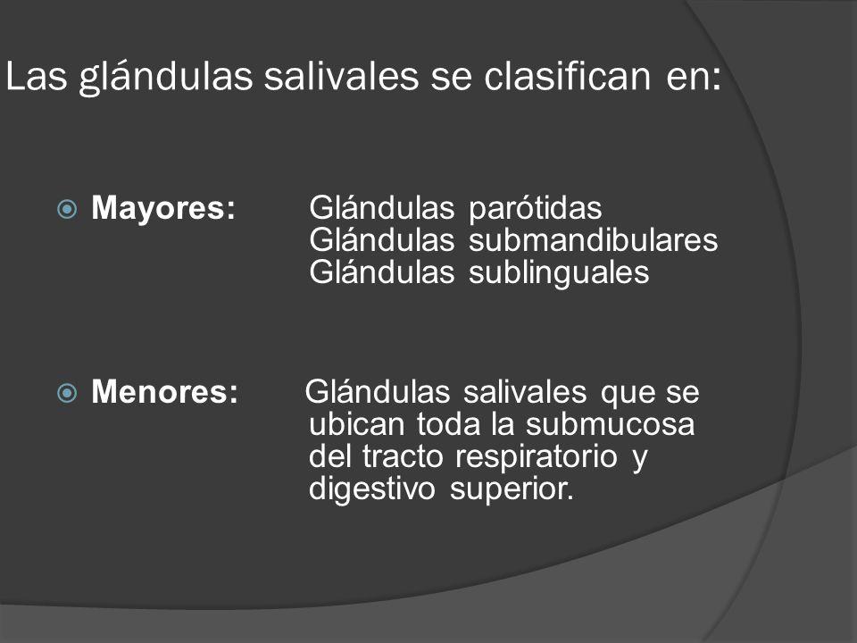 Las glándulas salivales se clasifican en: