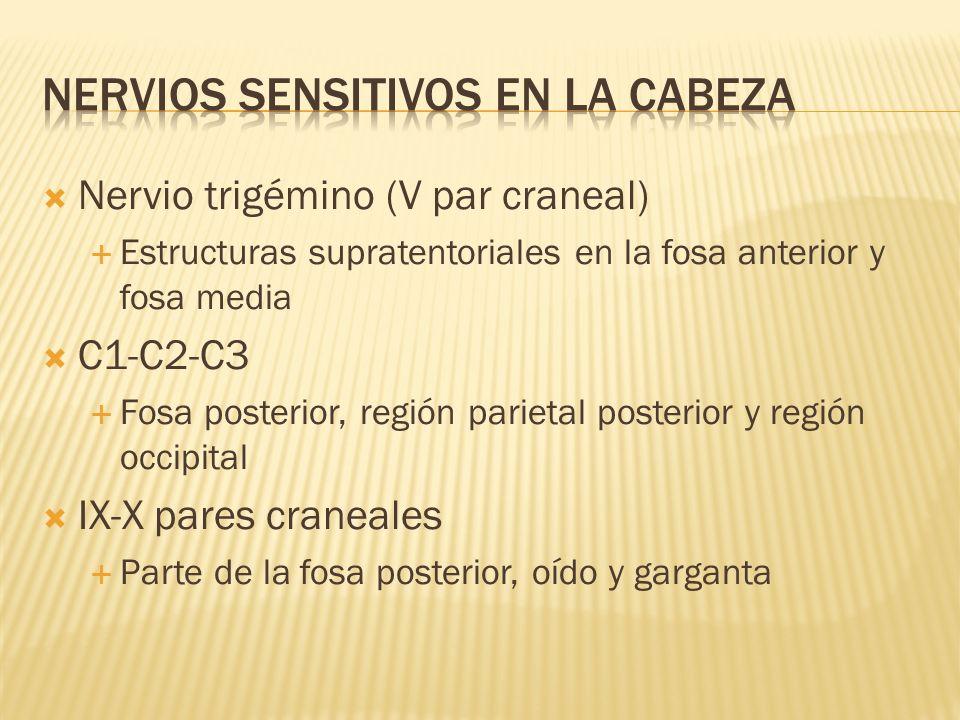 NERVIOS SENSITIVOS EN LA CABEZA