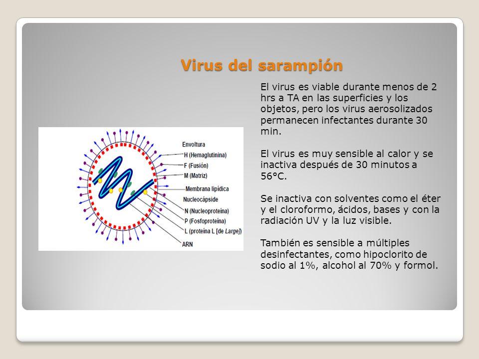 Virus del sarampión