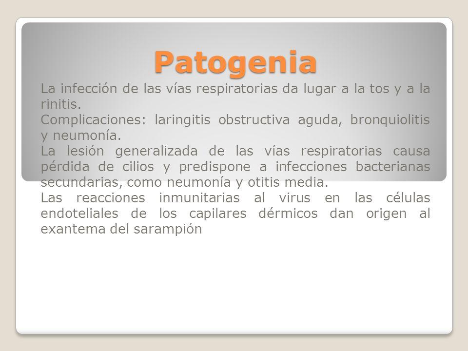 Patogenia La infección de las vías respiratorias da lugar a la tos y a la rinitis.