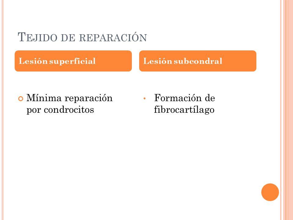 Tejido de reparación Mínima reparación por condrocitos