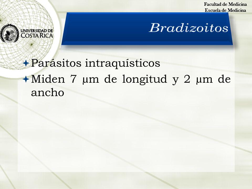 Bradizoitos Parásitos intraquísticos