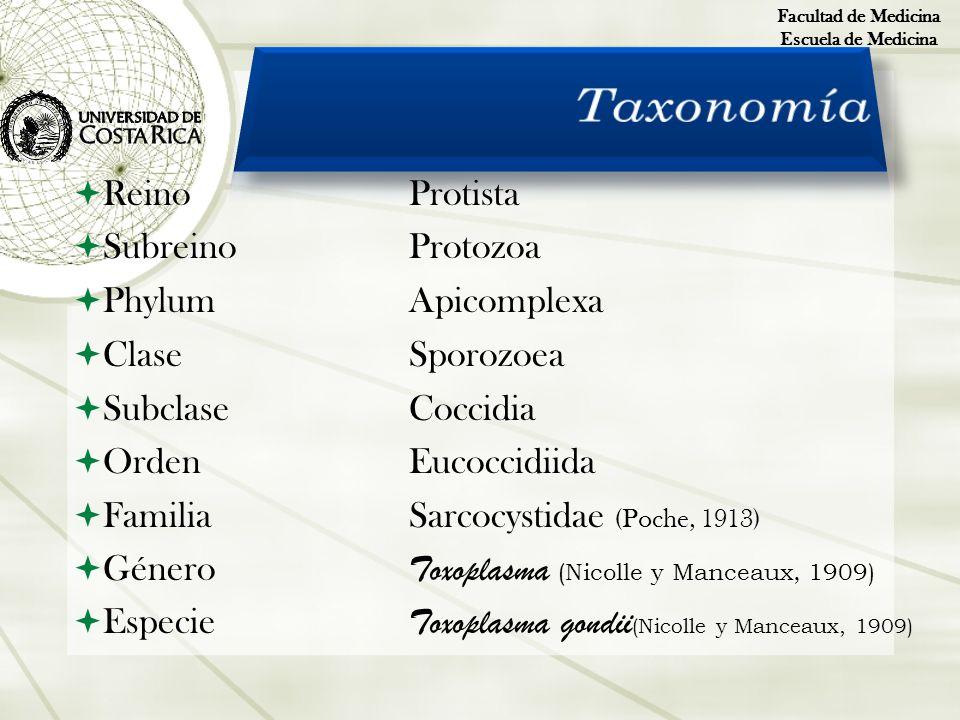 Taxonomía Reino Protista Subreino Protozoa Phylum Apicomplexa