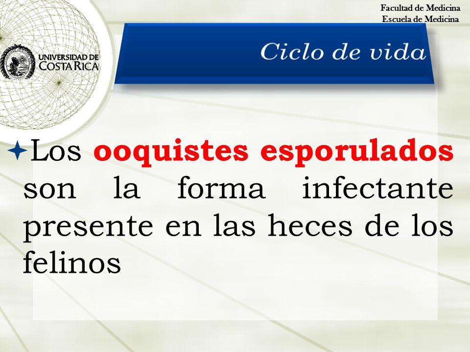 Facultad de Medicina Escuela de Medicina. Ciclo de vida.