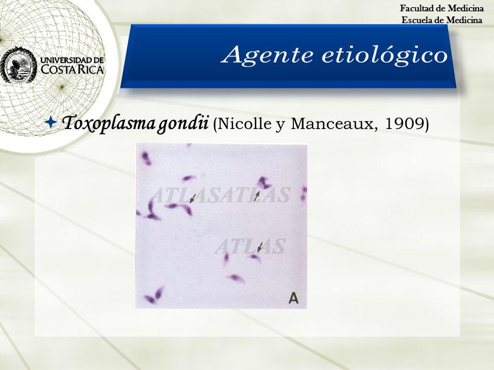 Agente etiológico Toxoplasma gondii (Nicolle y Manceaux, 1909)