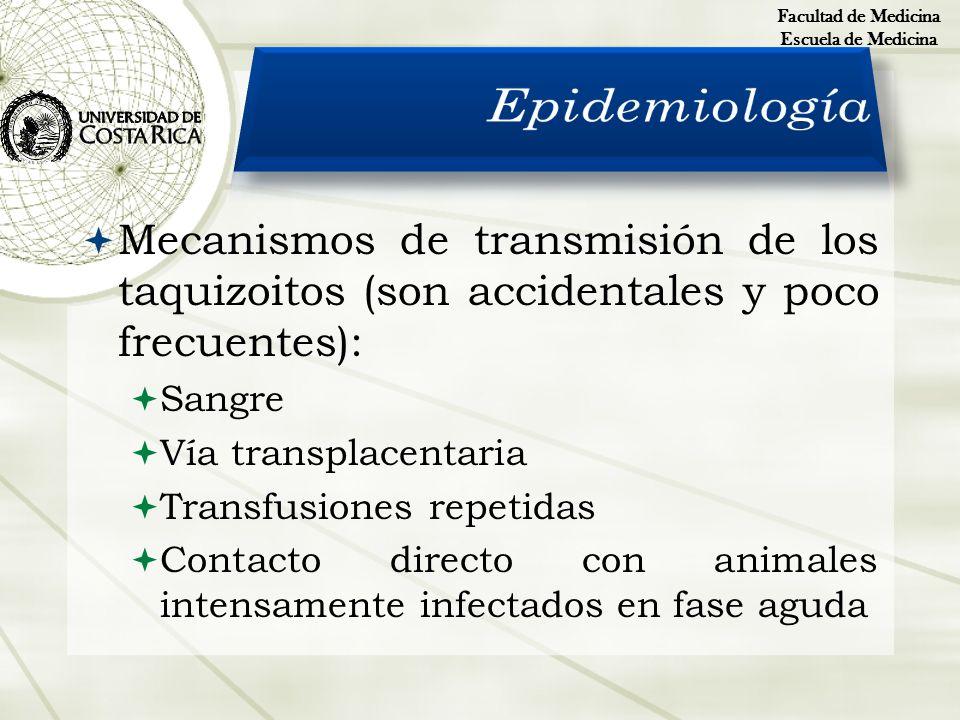 Facultad de MedicinaEscuela de Medicina. Epidemiología. Mecanismos de transmisión de los taquizoitos (son accidentales y poco frecuentes):
