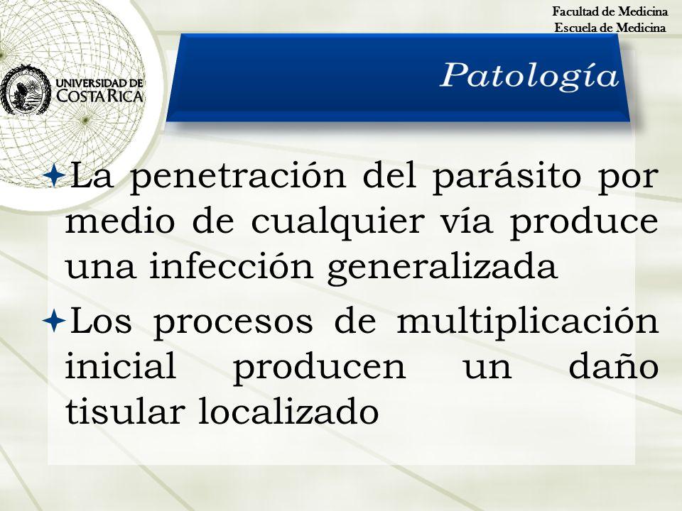 Facultad de Medicina Escuela de Medicina. Patología. La penetración del parásito por medio de cualquier vía produce una infección generalizada.