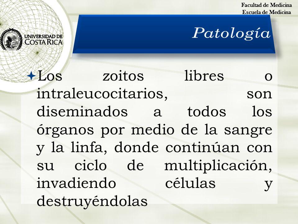 Facultad de Medicina Escuela de Medicina. Patología.
