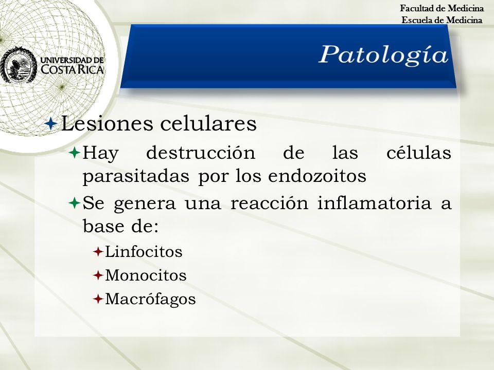 Patología Lesiones celulares