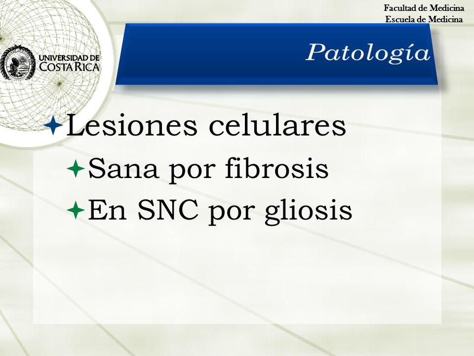 Lesiones celulares Patología Sana por fibrosis En SNC por gliosis