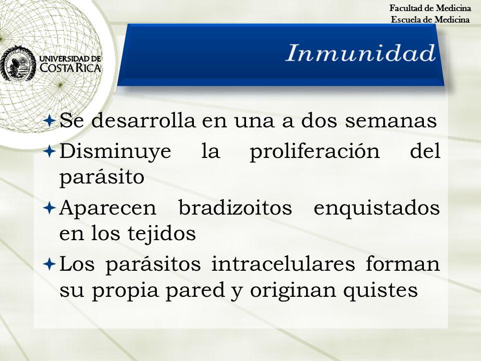 Inmunidad Se desarrolla en una a dos semanas
