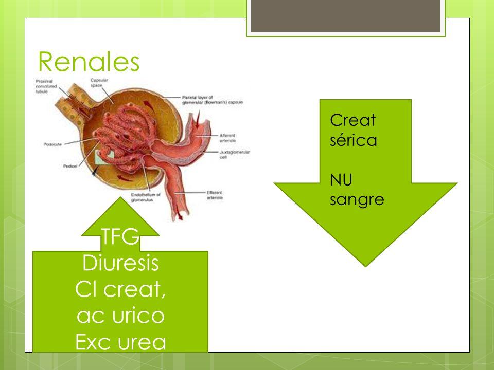 Renales TFG Diuresis Cl creat, ac urico Exc urea Creat sérica