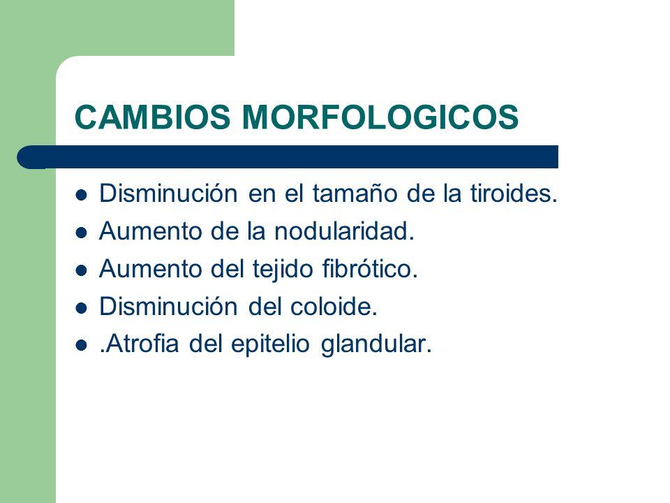 CAMBIOS MORFOLOGICOS Disminución en el tamaño de la tiroides.