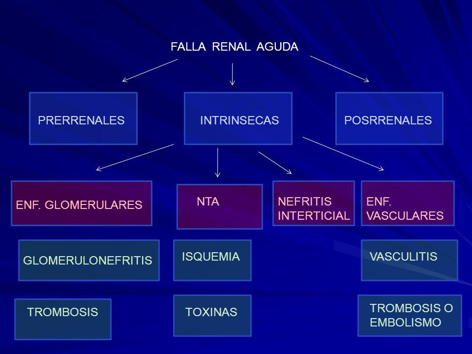 FALLA RENAL AGUDAPRERRENALES. INTRINSECAS. POSRRENALES. NTA. NEFRITIS INTERTICIAL. ENF. VASCULARES.