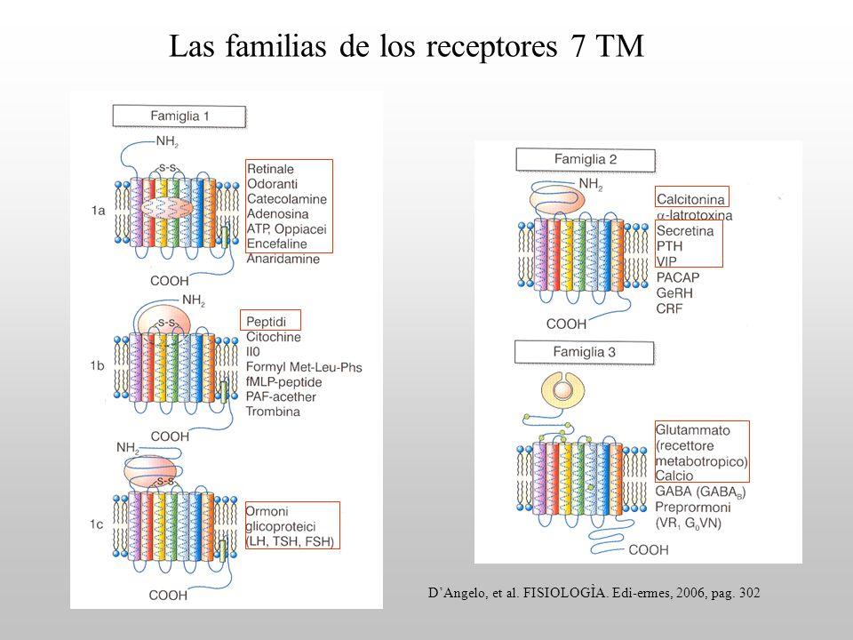 Las familias de los receptores 7 TM