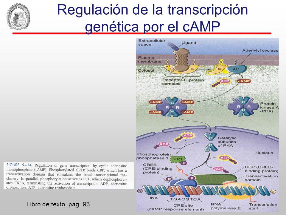 Regulación de la transcripción genética por el cAMP