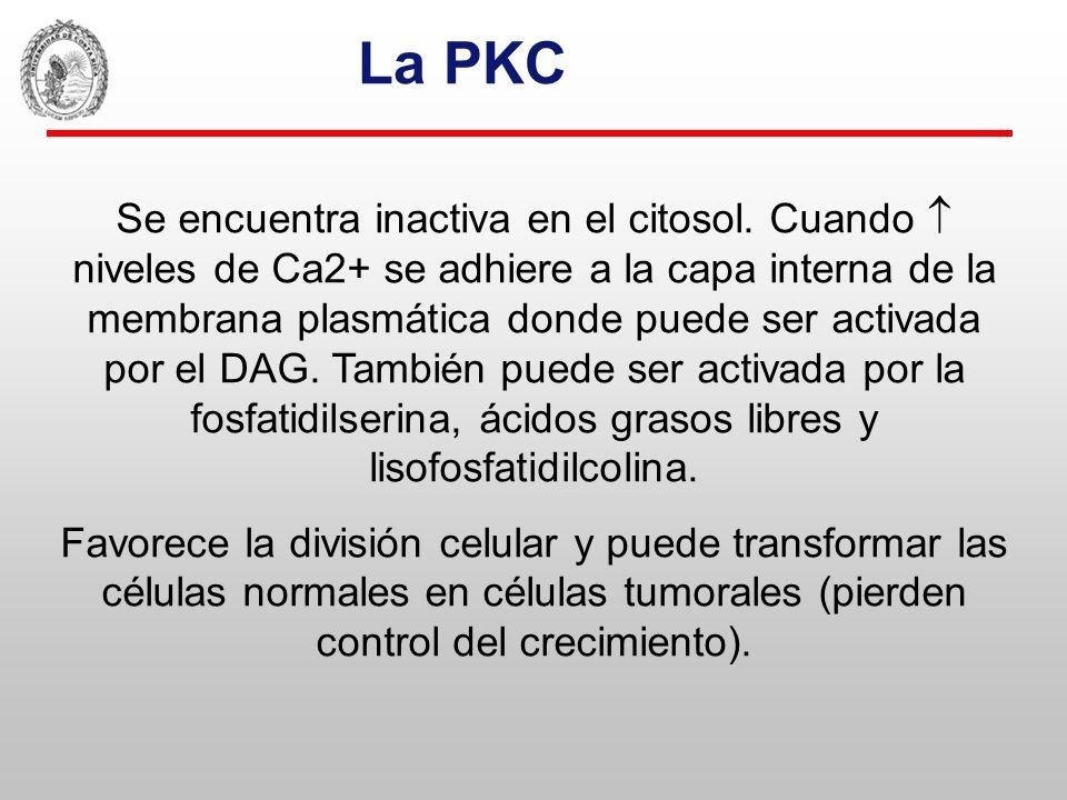 La PKC