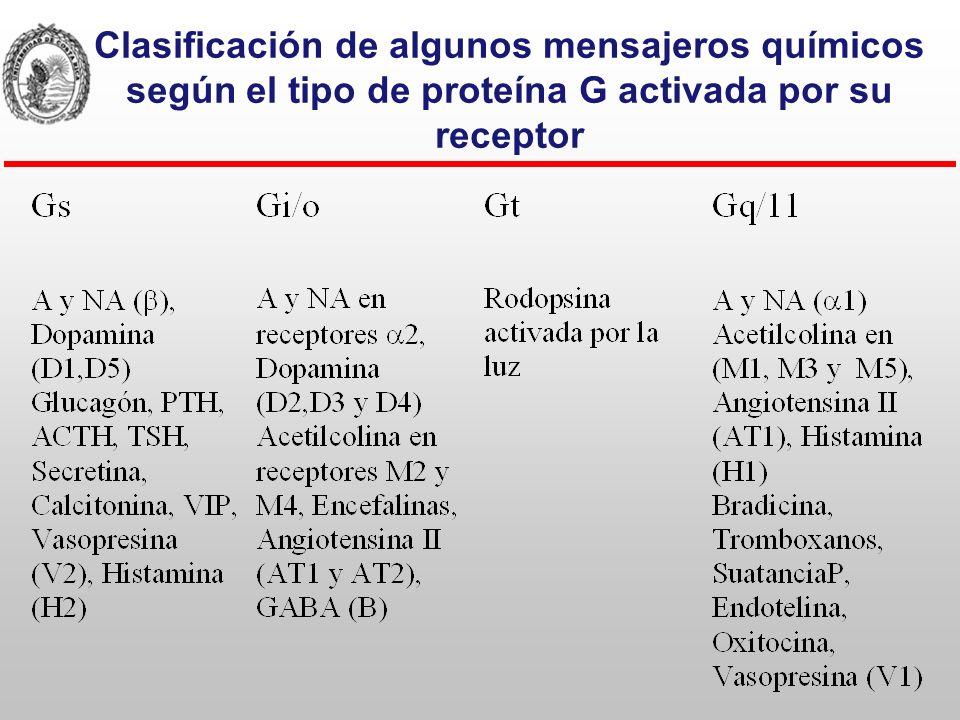 Clasificación de algunos mensajeros químicos según el tipo de proteína G activada por su receptor