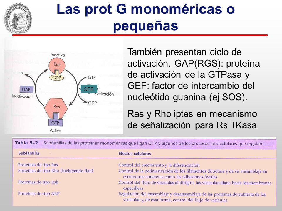 Las prot G monoméricas o pequeñas