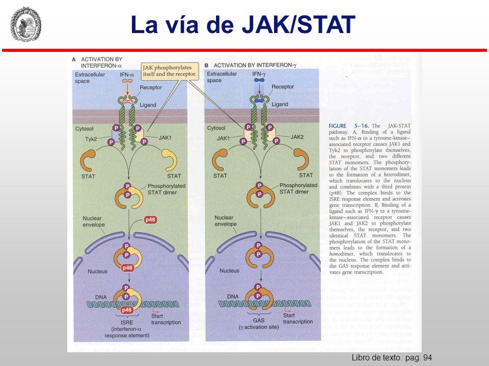 La vía de JAK/STAT Libro de texto. pag. 94